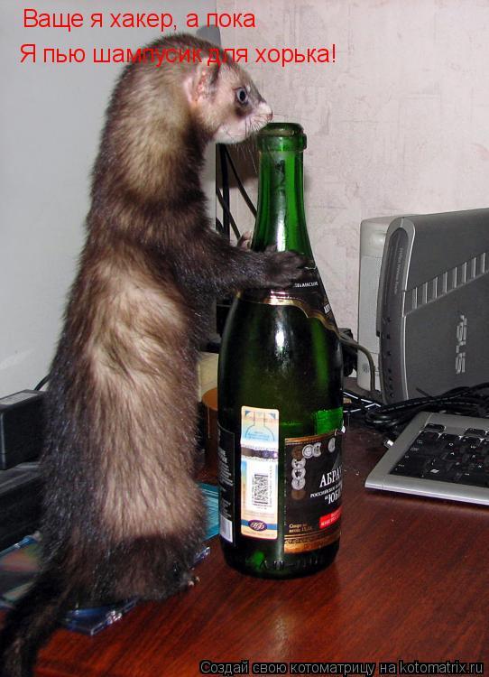 Котоматрица: Ваще я хакер, а пока Я пью шампусик для хорька!