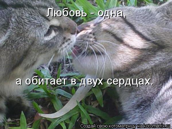Котоматрица: Любовь - одна, а обитает в двух сердцах.