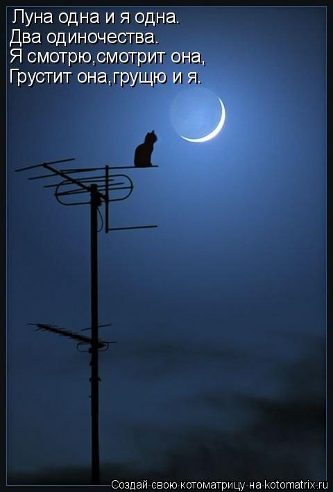 Котоматрица: Луна одна и я одна. Два одиночества. Я смотрю,смотрит она, Грустит она,грущю и я.