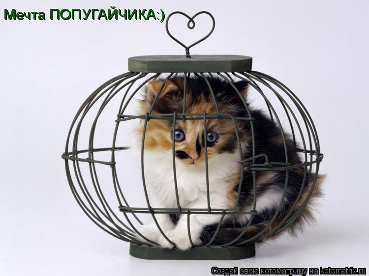 Котоматрица: Мечта ПОПУГАЙЧИКА:)