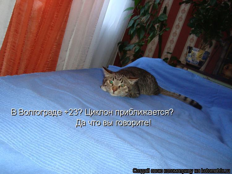 Котоматрица: В Волгограде +23? Циклон приближается?  Да что вы говорите!