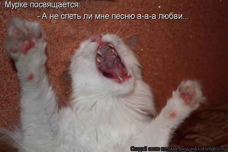 Котоматрица: Мурке посвящается: - А не спеть ли мне песню а-а-а любви...