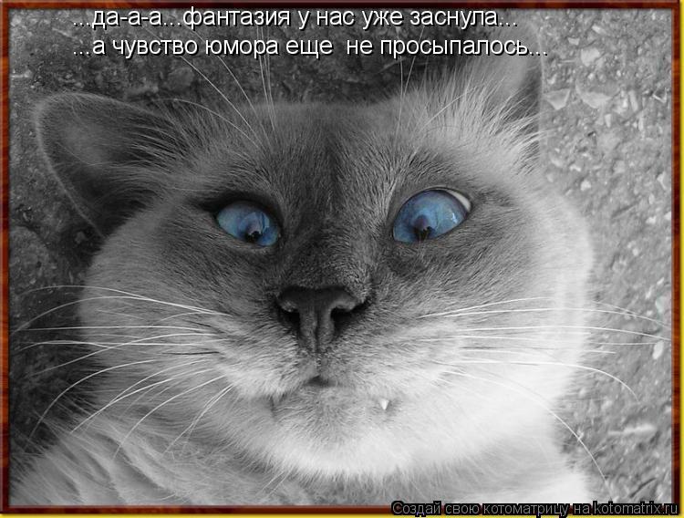 Котоматрица: ...а чувство юмора еще  не просыпалось... ...да-а-а...фантазия у нас уже заснула...
