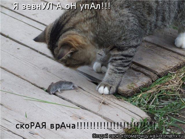 Котоматрица: Я зевнУЛ А оН упАл!!! скоРАЯ врАча!!!!!!!!!!!!!!!!!!!!!!!!