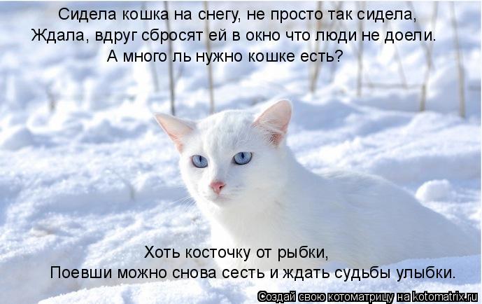 Котоматрица: Сидела кошка на снегу, не просто так сидела, Ждала, вдруг сбросят ей в окно что люди не доели. А много ль нужно кошке есть? Хоть косточку от ры