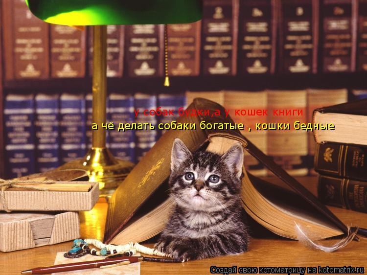 Котоматрица: у собак будки,а у кошек книги а чё делать собаки богатые , кошки бедные