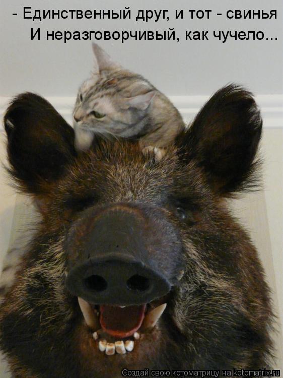 Котоматрица: - Единственный друг, и тот - свинья  И неразговорчивый, как чучело...