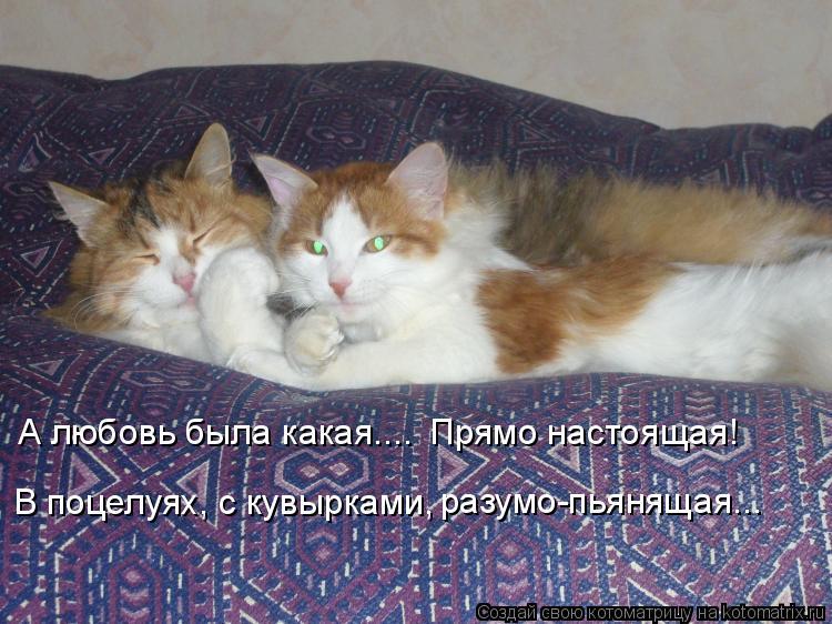 Котоматрица: А любовь была какая.... Прямо настоящая! В поцелуях, с кувырками, разумо-пьянящая...