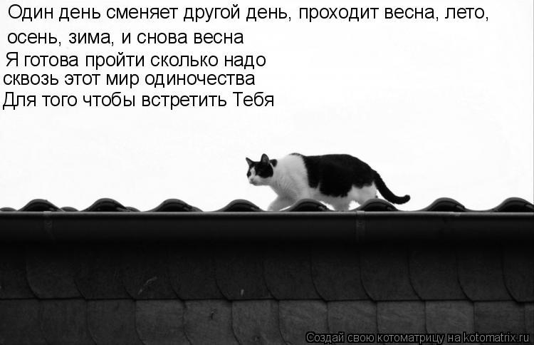 Котоматрица: Один день сменяет другой день, проходит весна, лето,  осень, зима, и снова весна Я готова пройти сколько надо сквозь этот мир одиночества Для