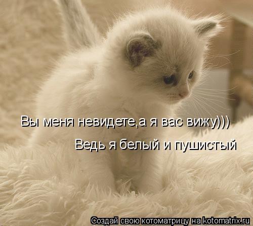 Котоматрица: Вы меня невидете,а я вас вижу))) Ведь я белый и пушистый
