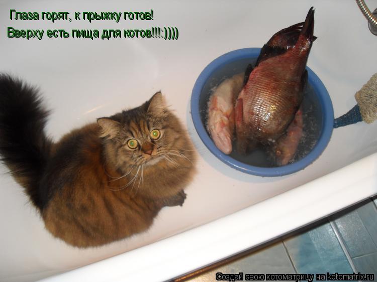 Котоматрица: Глаза горят, к прыжку готов! Вверху есть пища для котов!!!:))))