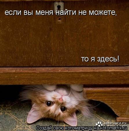Котоматрица: если вы меня найти не можете, то я здесь!