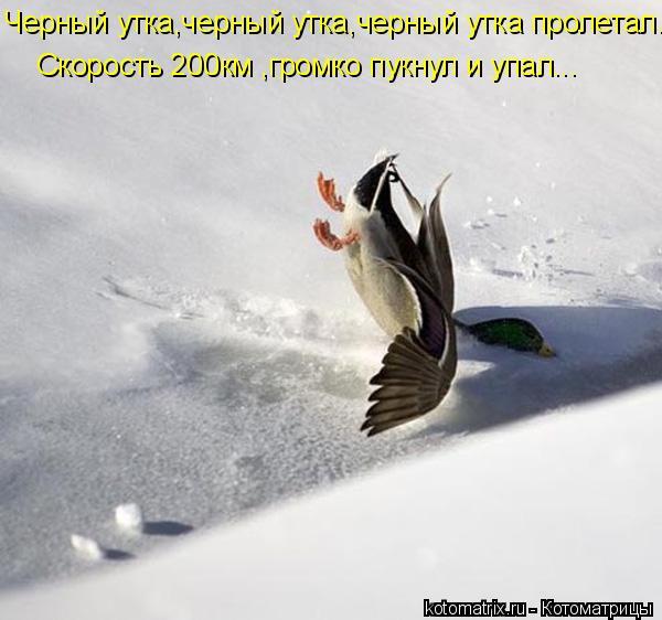 Котоматрица: Черный утка,черный утка,черный утка пролетал.. Скорость 200км ,громко пукнул и упал...