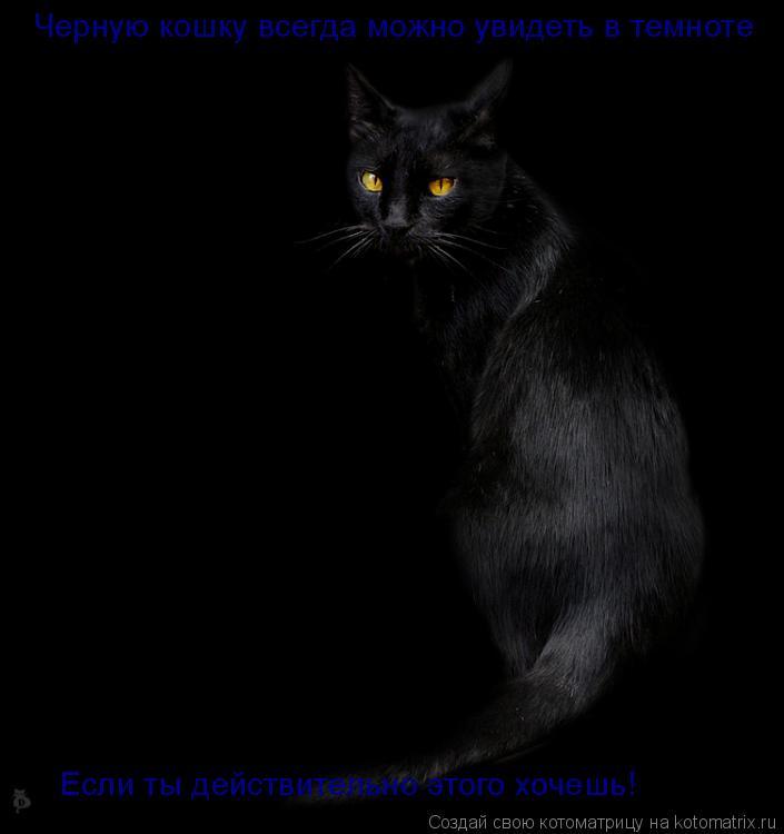 Котоматрица: Черную кошку всегда можно увидеть в темноте Если ты действительно этого хочешь!
