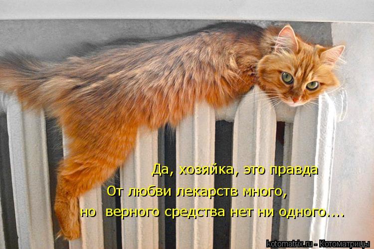 Котоматрица: От любви лекарств много,  но  верного средства нет ни одного.... Да, хозяйка, это правда