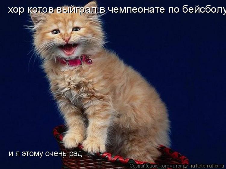 Котоматрица: хор котов выйграл в чемпеонате по бейсболу и я этому очень рад