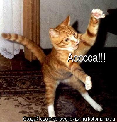 Котоматрица: Асссса!!!