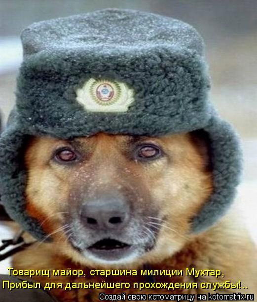 Котоматрица: Товарищ майор, старшина милиции Мухтар, Прибыл для дальнейшего прохождения службы!..