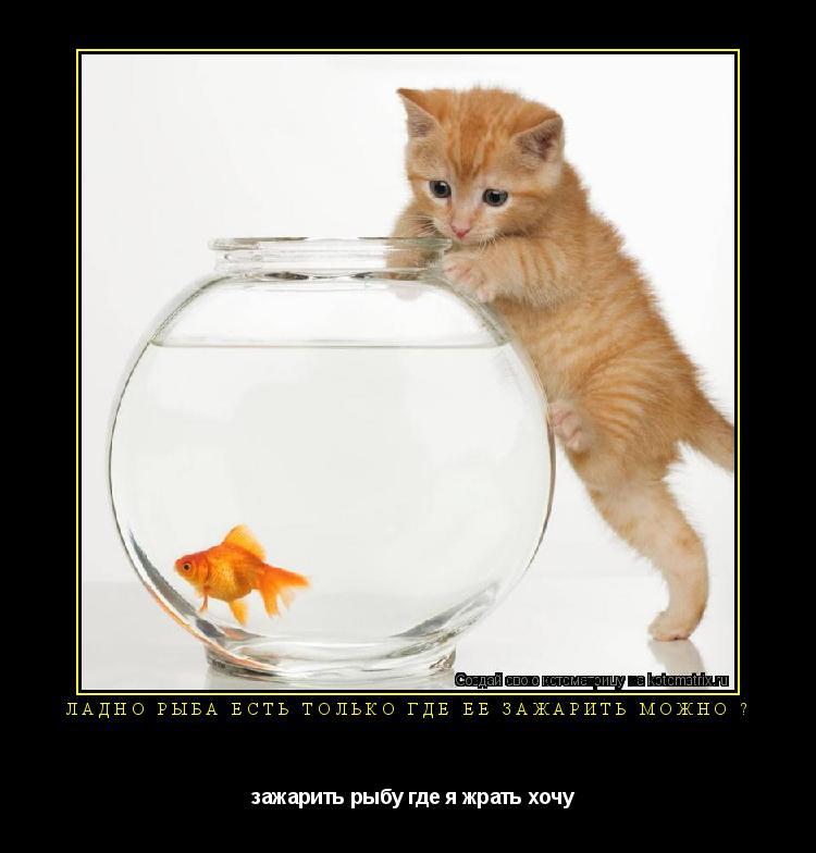 Котоматрица: Ладно рыба есть только где её зажарить можно ?   зажарить рыбу где я жрать хочу