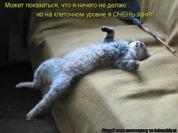 http://kotomatrix.ru/images/lolz/2009/05/20/6P.jpg