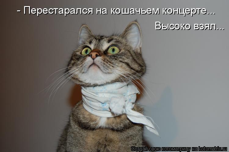 Котоматрица: - Перестарался на кошачьем концерте... Высоко взял...