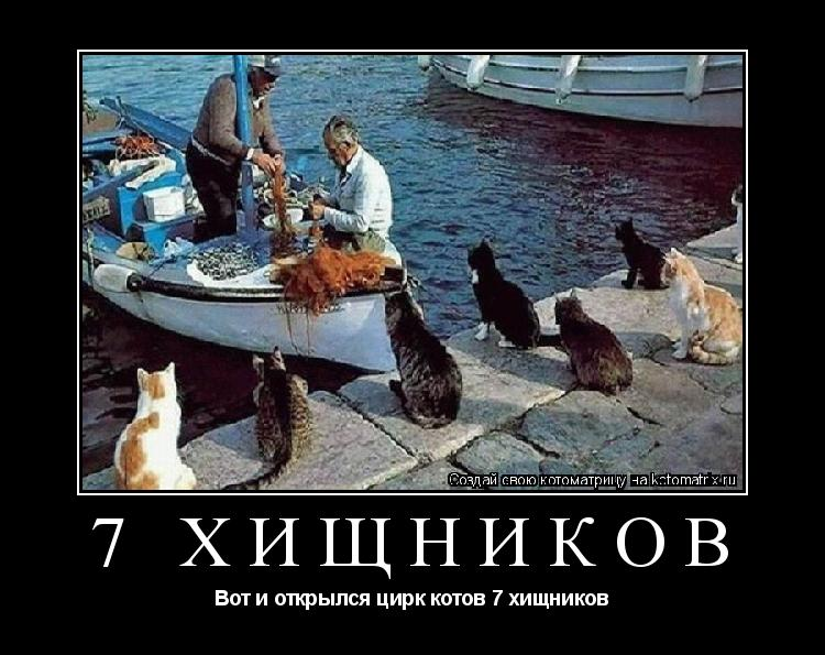 Котоматрица: 7 Хищников Вот и открылся цирк котов 7 хищников