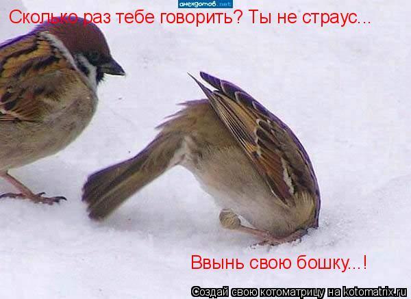 Котоматрица: Сколько раз тебе говорить? Ты не страус... Ввынь свою бошку...!