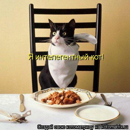 Котоматрица: Я интелегентный кот!