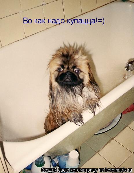 Котоматрица: Во как надо купацца!=)