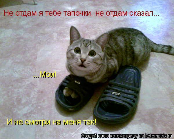 Котоматрица: Не отдам я тебе тапочки, не отдам сказал... ...Мои! И не смотри на меня так!