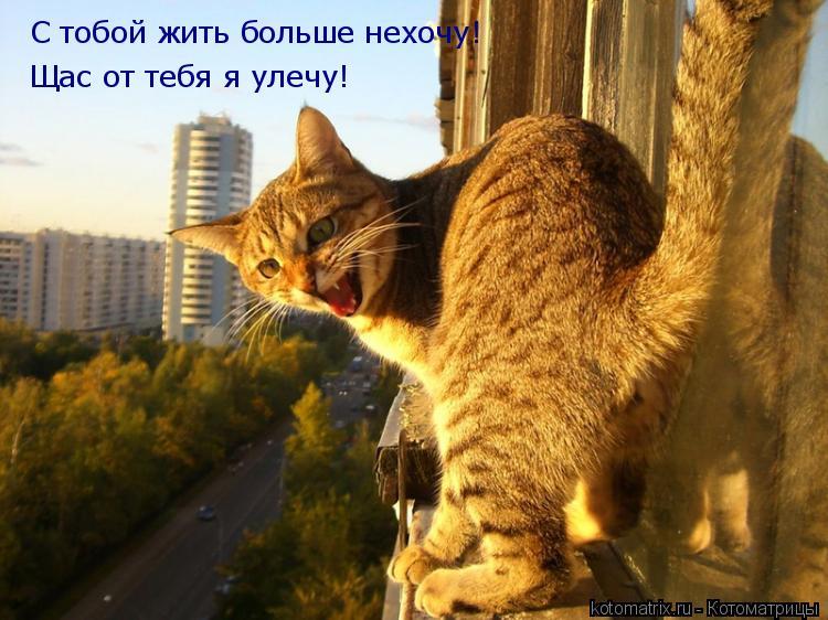 Котоматрица: С тобой жить больше нехочу! Щас от тебя я улечу!