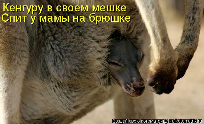 Котоматрица: Кенгуру в своем мешке Спит у мамы на брюшке