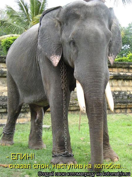 Котоматрица: - БЛИН! - сказал слон, наступив на колобка...