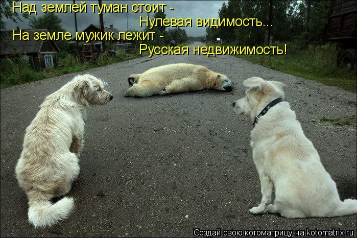 Котоматрица: Над землей туман стоит - Нулевая видимость... На земле мужик лежит - Русская недвижимость!