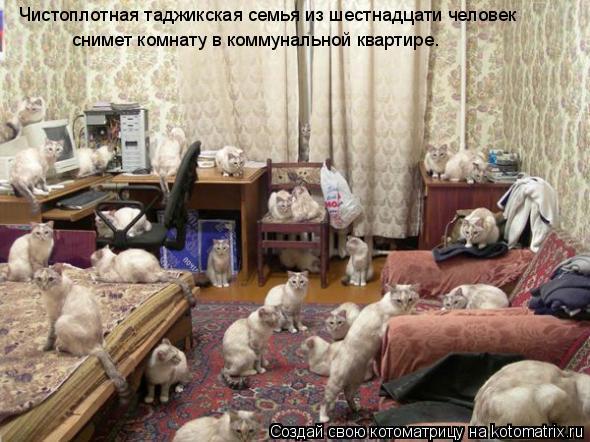 Котоматрица: Чистоплотная таджикская семья из шестнадцати человек  снимет комнату в коммунальной квартире.
