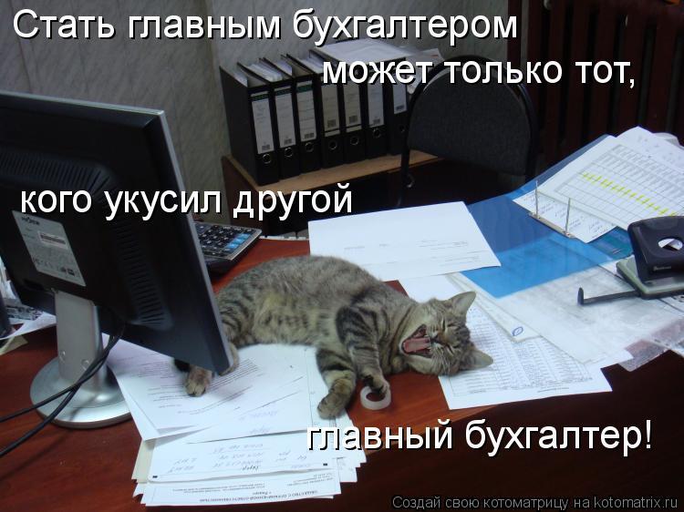 Котоматрица: Стать главным бухгалтером может только тот, кого укусил другой главный бухгалтер!