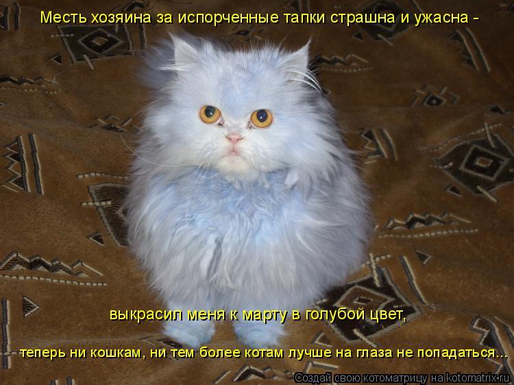 Котоматрица: выкрасил меня к марту в голубой цвет, теперь ни кошкам, ни тем более котам лучше на глаза не попадаться... Месть хозяина за испорченные тапки