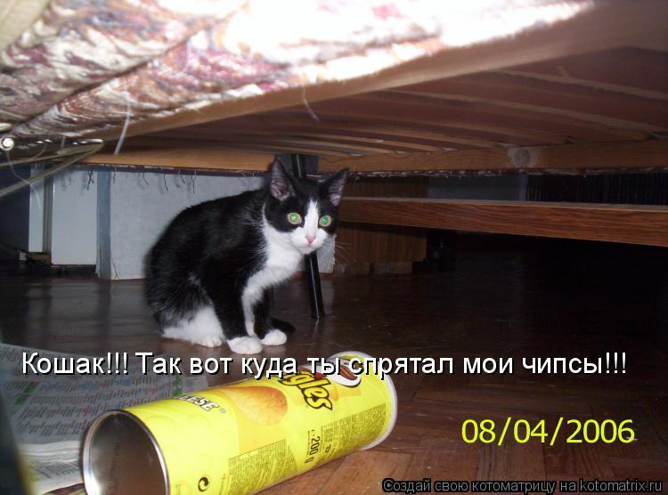 Котоматрица: Кошак!!! Так вот куда ты спрятал мои чипсы!!!