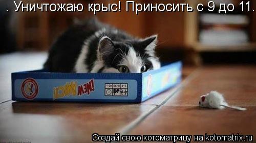 Котоматрица: • Уничтожаю крыс! Приносить с 9 до 11.