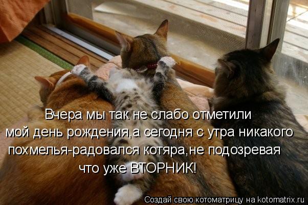 Котоматрица: Вчера мы так не слабо отметили мой день рождения,а сегодня с утра никакого похмелья-радовался котяра,не подозревая  что уже ВТОРНИК!