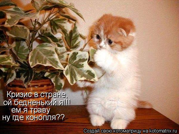 Котоматрица: Кризис в стране, ой бедненький я!!! ем я траву ну где конопля??