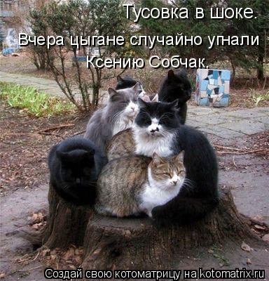 Котоматрица: Тусовка в шоке.  Вчера цыгане случайно угнали  Ксению Собчак.