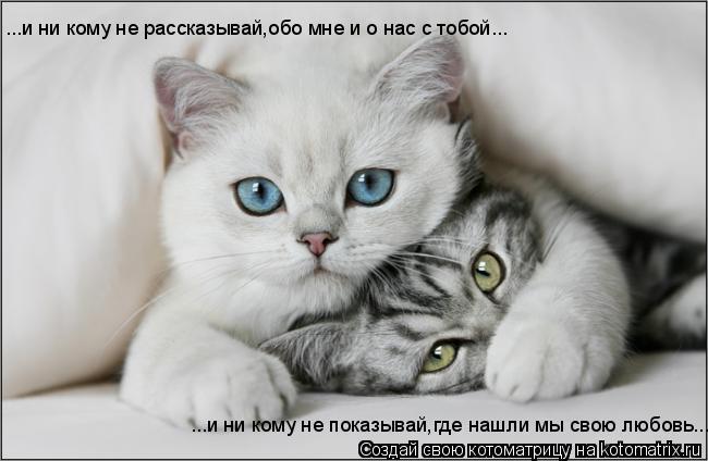 Котоматрица: ...и ни кому не рассказывай,обо мне и о нас с тобой... ...и ни кому не показывай,где нашли мы свою любовь...