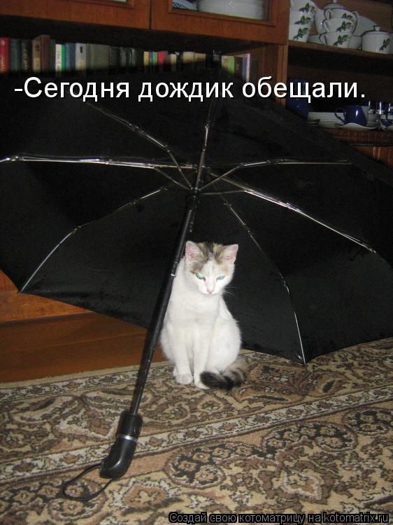 Котоматрица: -Сегодня дождик обещали.