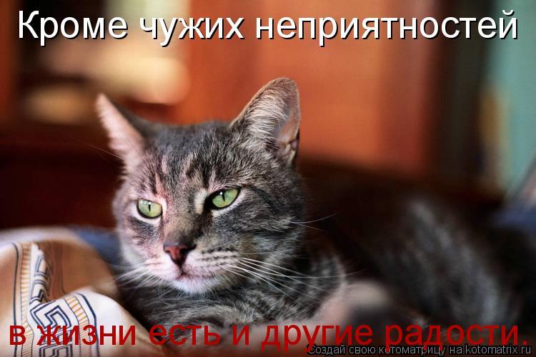 Котоматрица: Кроме чужих неприятностей  в жизни есть и другие радости.