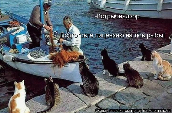 Котоматрица: -Котрыбнадзор Подготовте лицензию на лов рыбы!