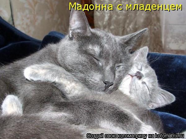 Котоматрица: Мадонна с младенцем