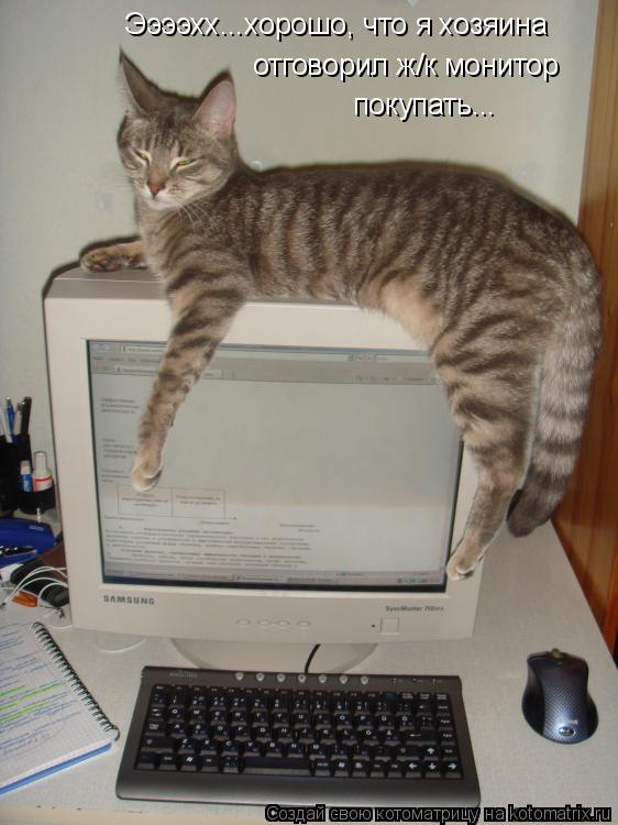Котоматрица: Ээээхх...хорошо, что я хозяина отговорил ж/к монитор  покупать...