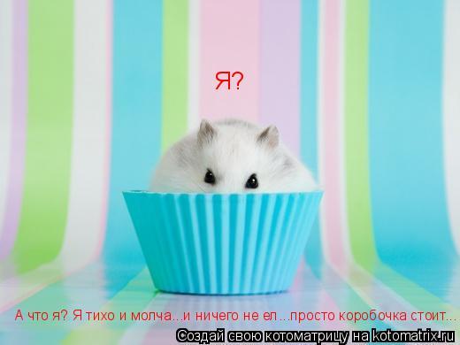 Котоматрица: Я? А что я? Я тихо и молча...и ничего не ел...просто коробочка стоит...
