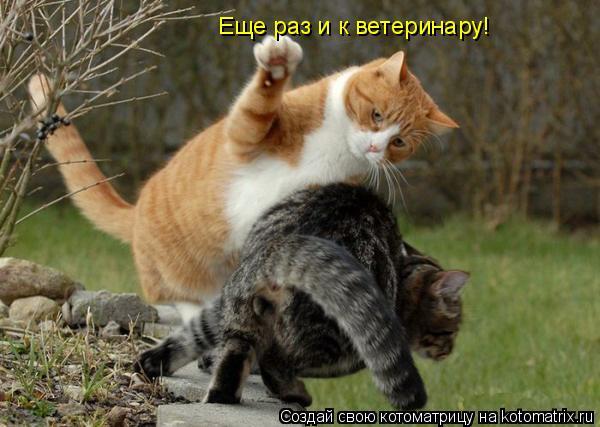 Котоматрица: Еще раз и к ветеринару!